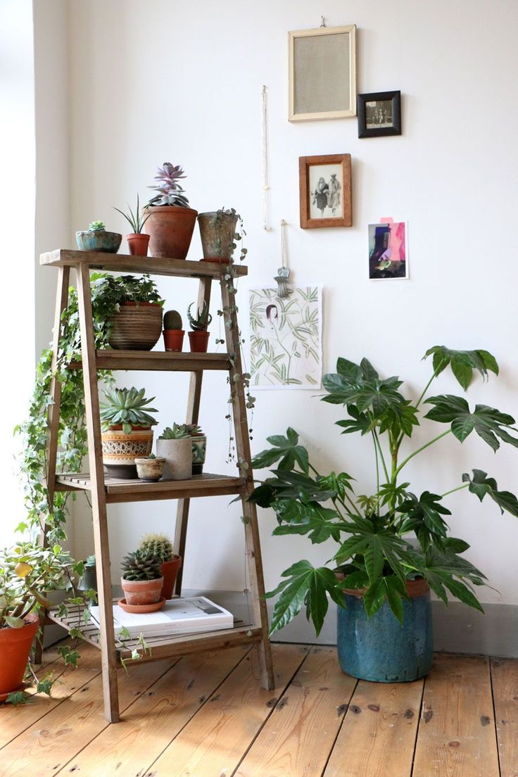 Clean Your Air With Indoor Plants