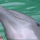 Dolphins 010