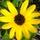 Flowers   bike trip   12 24 008