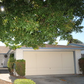 Veena Grover, Fremont Realtor: Homes for Sale in Fremont & Union City (Re/Max)