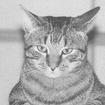 Barcat2