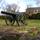 Chatham cannon