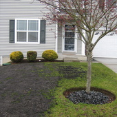 Wendell Allen (AA Landscaping Services)