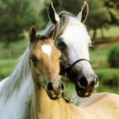 Jessica  Senecal, Horse Property Specialist (Solutions Real Estate)