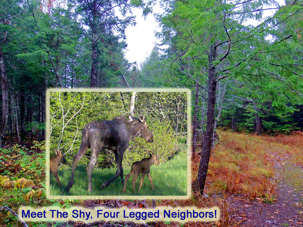 Homesteading On Land In Maine Waterfront Property