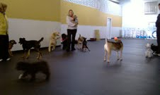 Fido fitness club in Woodmere