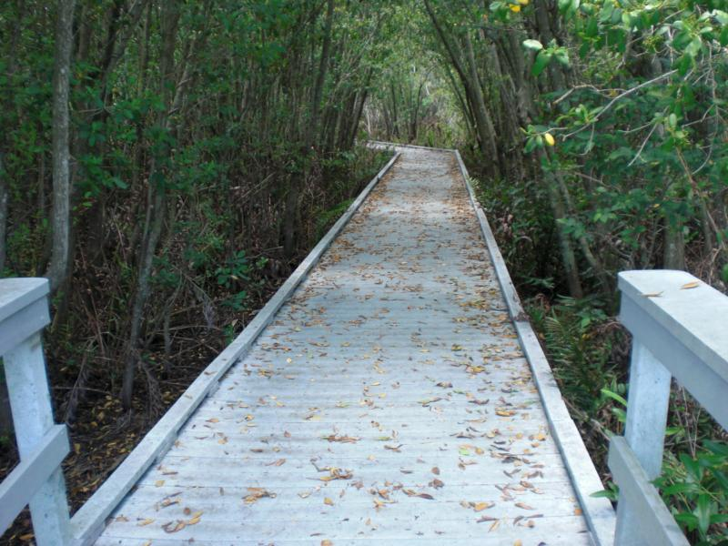 Four Mile Cove Trails