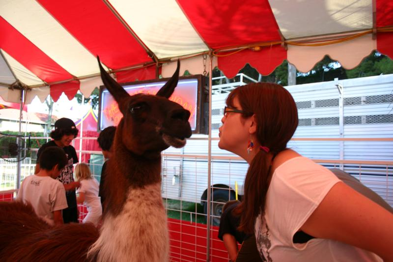 Orange County Fair Llama