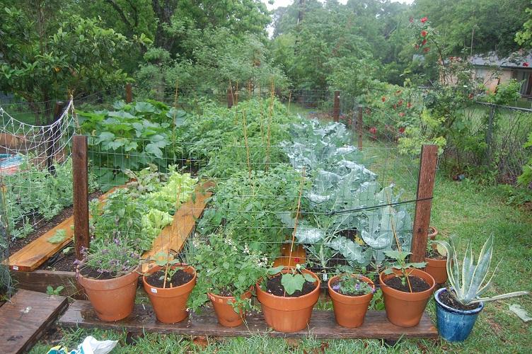 Darlington Garden