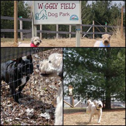 Dog Parks Near Elgin Il