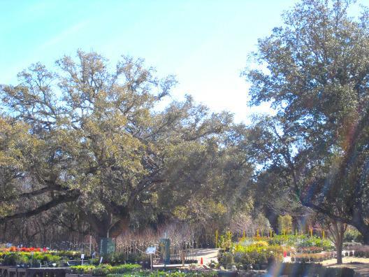The Garden Center San Antonio Texas 78250
