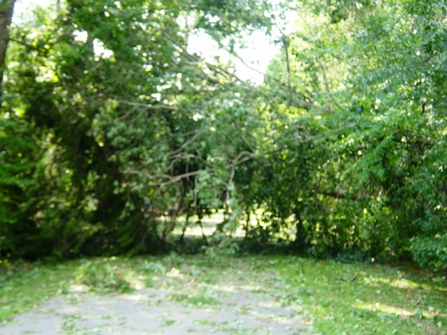 Solomons-Hurricane Irene-downed trees