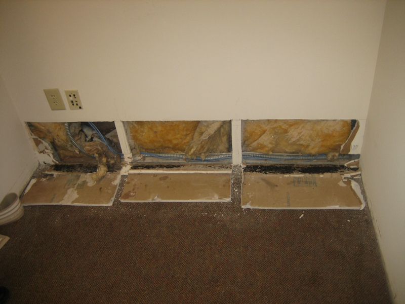 Black Mold From Water Intrusion
