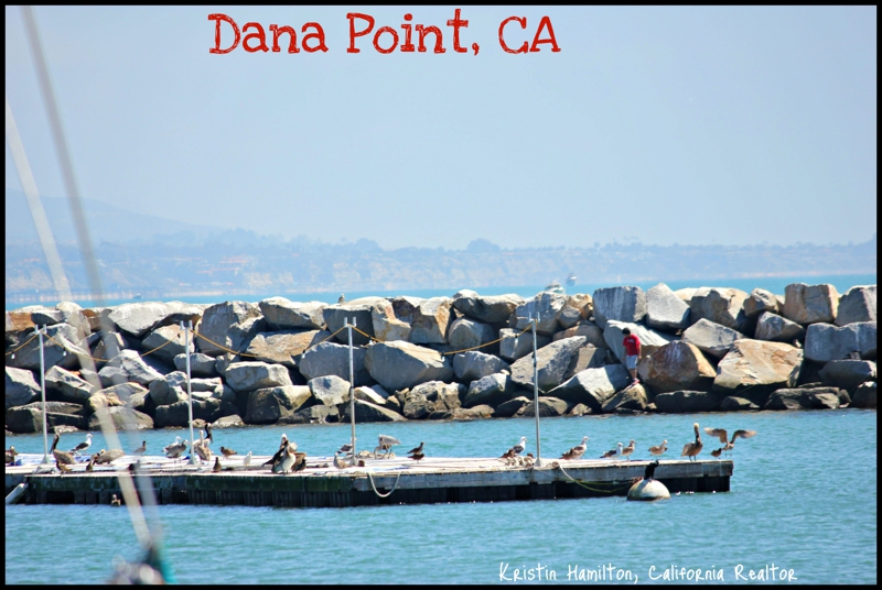 The bait house at dana point who is next for fish for Fishing dana point