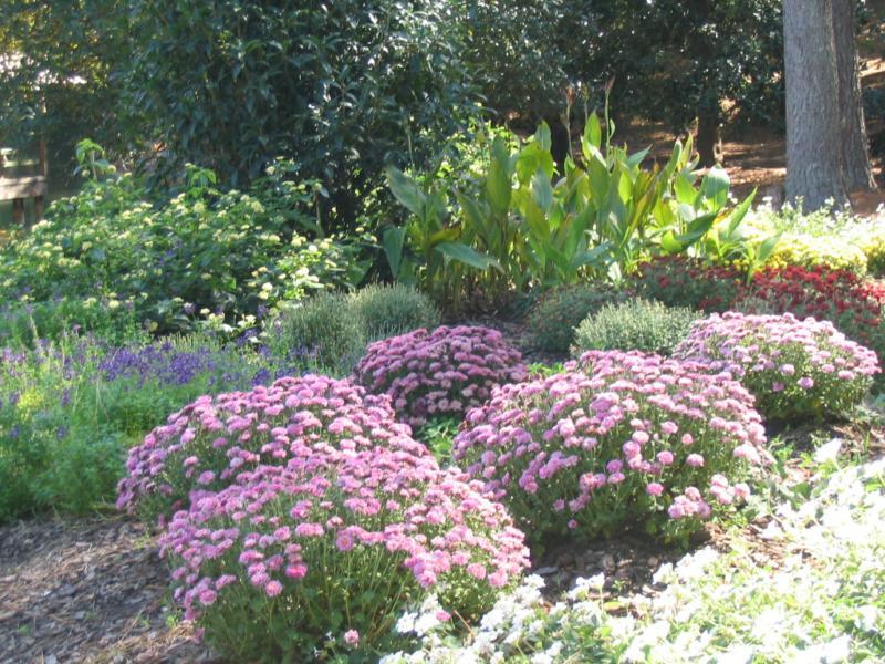 Aldridge Gardens Fall Hydrangea Sale Hoover Al