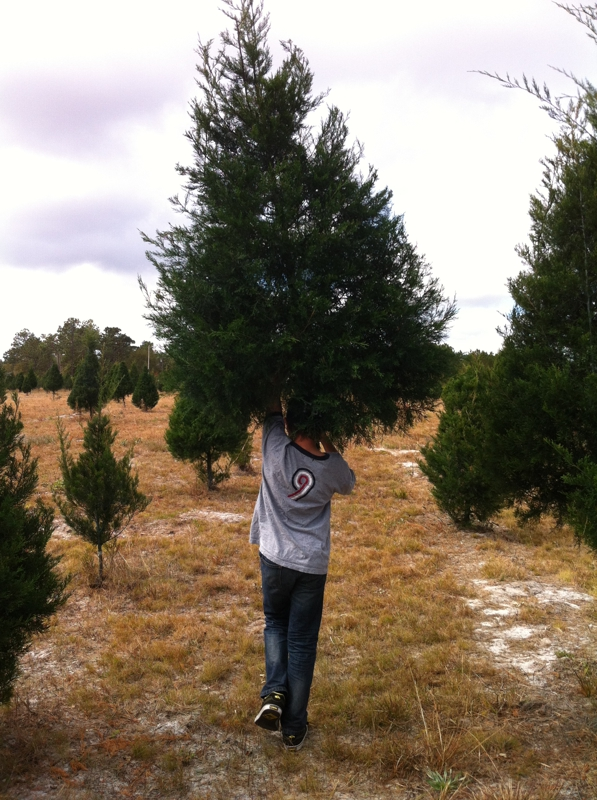 Drew carrying a tree at Songer's Christmas Tree Farm