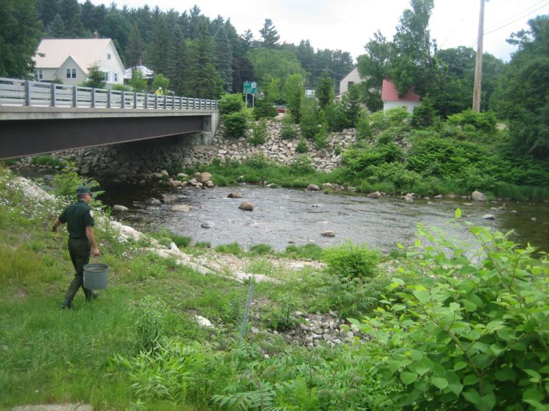 Bartlett jackson nh real estate market for Best trout fishing in new hampshire