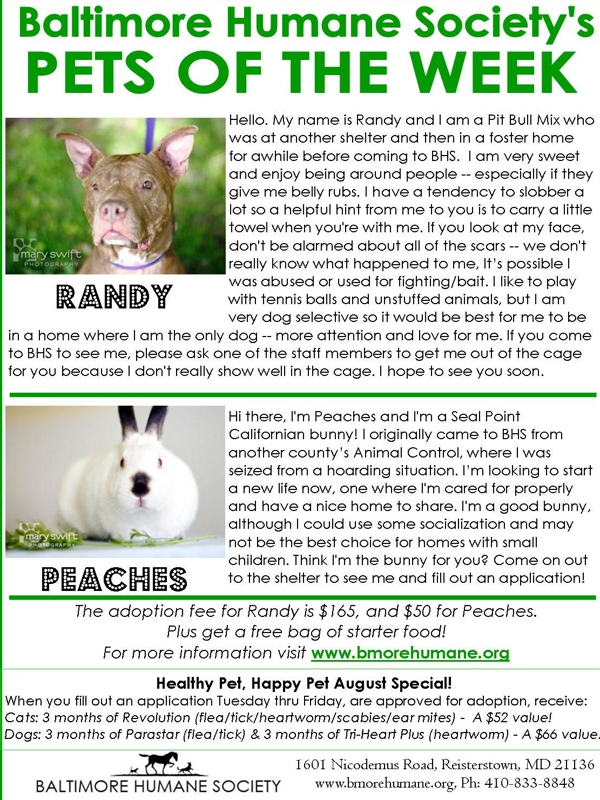 Baltimore Humane Society Randy Peaches