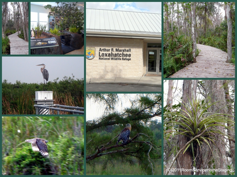 Arthur R Marshall Loxahatchee Wildlife Refuge