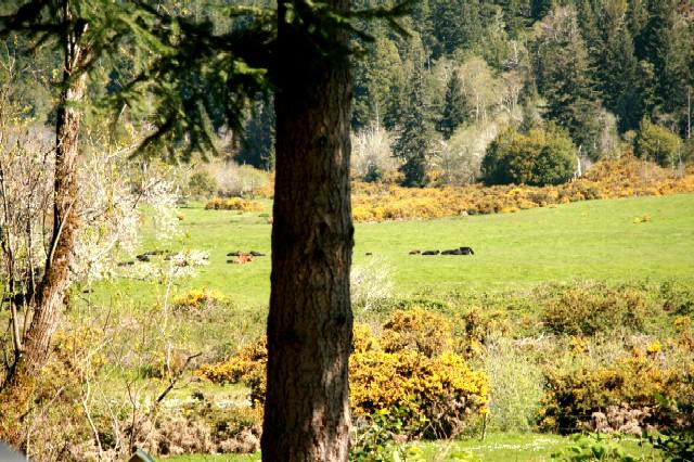 River valley pasture view