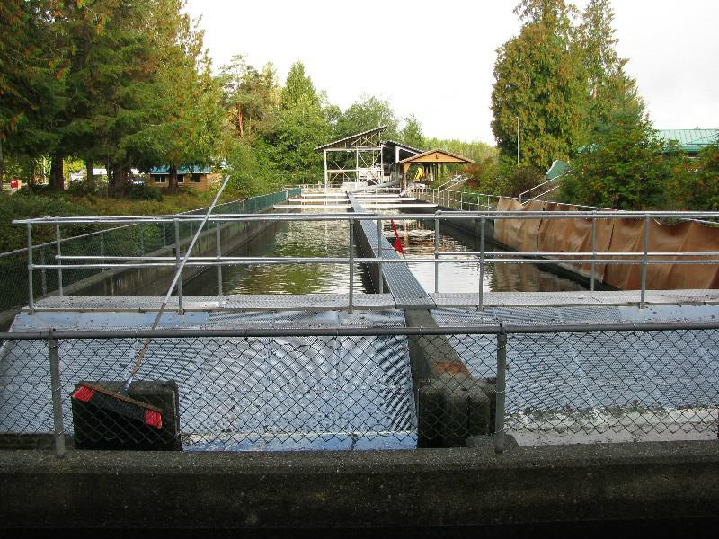 Fish Tanks at Robertson Creek Fish Hatchery