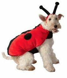 dog in lady bug costume