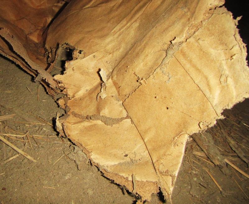 Termites in paper