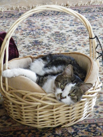 Beautiful Bubba in a basket