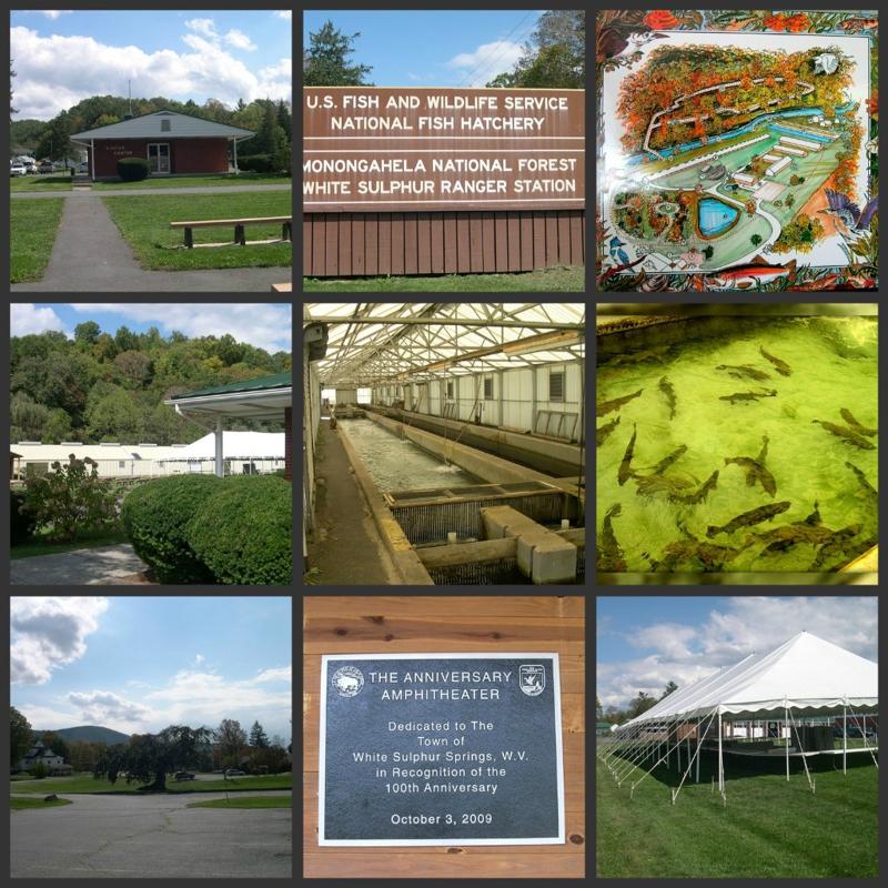 Freshwater folk festival celebrates our nation 39 s fish for Virginia fish hatchery