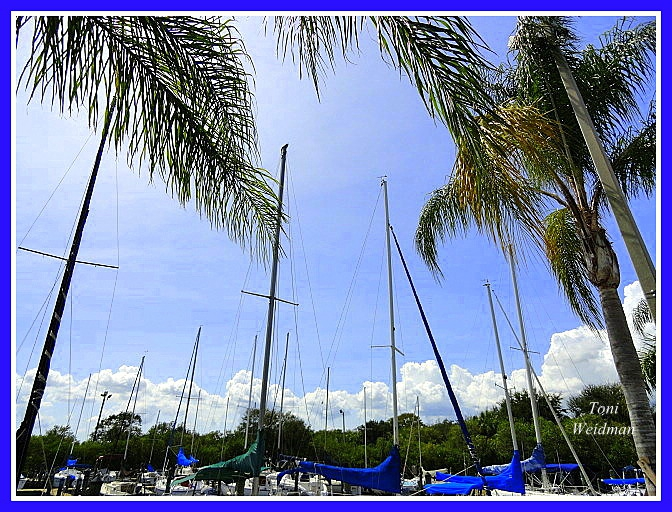 sailboats in Safety Harbor, FL