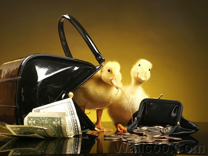 Two ducklings a purse and a wallet