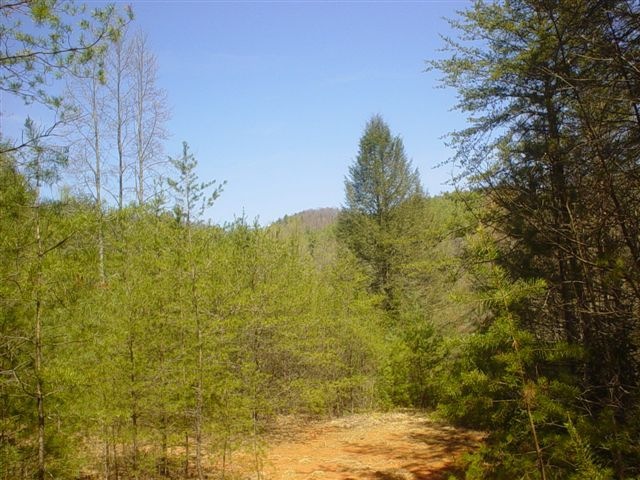 5.25 unrestricted acres for sale in murphy nc