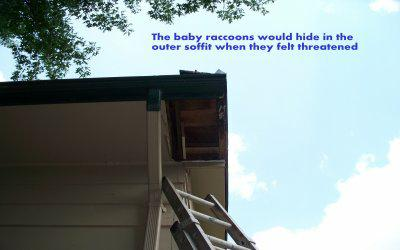 Outer Soffit