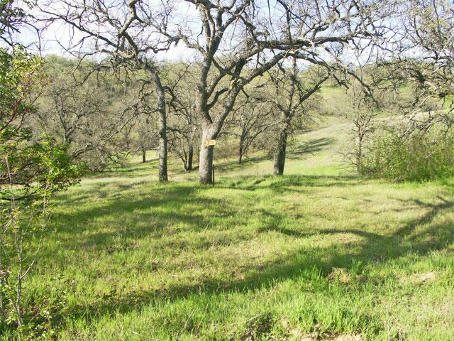 ar125527799525051 Northern California Land for Sale   1.5 Acres of Oak Studded Land   $15,000   Rancho Tehama CA!