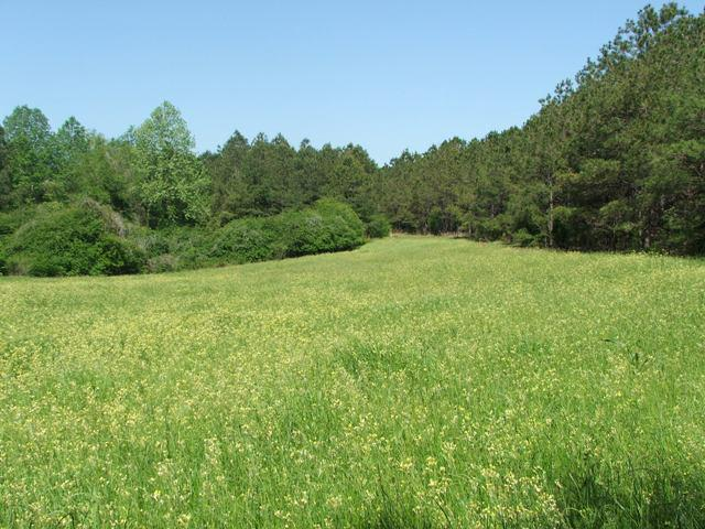 Beautiful Land for Sale in Dallas County, Alabama