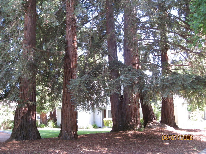 Mature redwoods Regency Park townhomes for sale San Jose Calif 95129 image