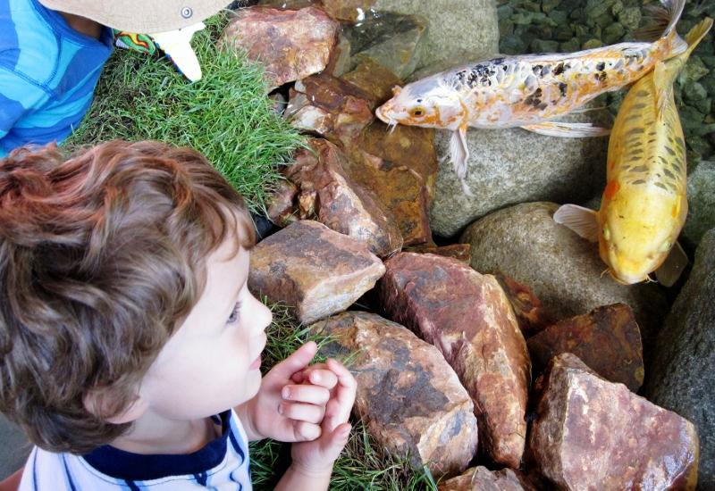 Orange County Fair Koi Pond
