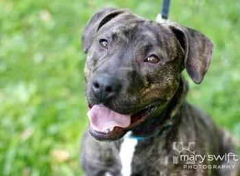 Baltimore Humane Society Brutus