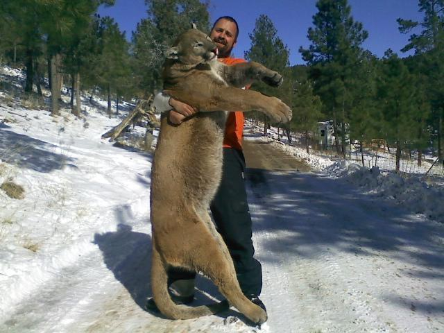 Large Mountain Lion Spotted Near Ruidoso New Mexico