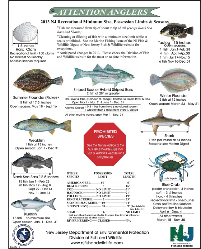 saltwater fish regulations 2013 nj saltwater fishing