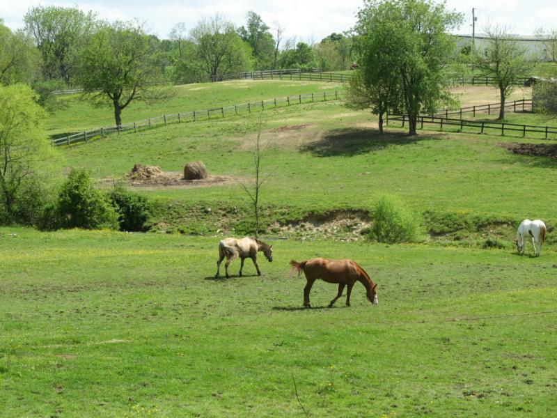 Horse Properties For Sale Loudoun County Va