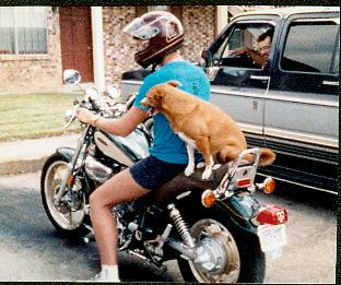 My marketing guru and his motorcycle-riding dog