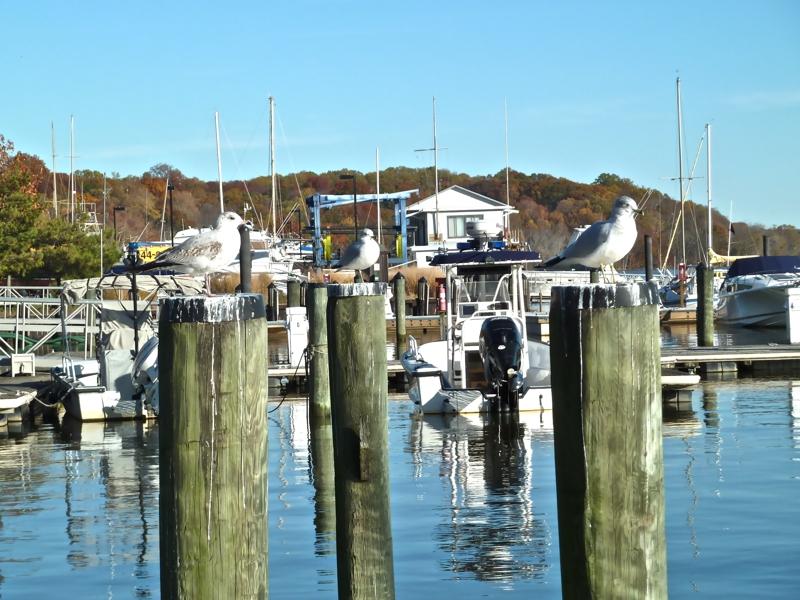 Fort Washington Marina - Marinas - 13600 King Charles Ter ...