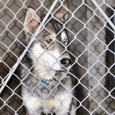 Renters Insurance Dog Breed Banned List