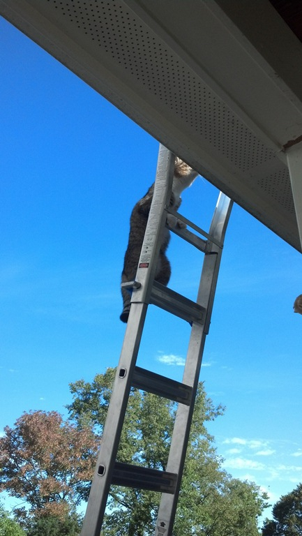 Cat on a Ladder 2