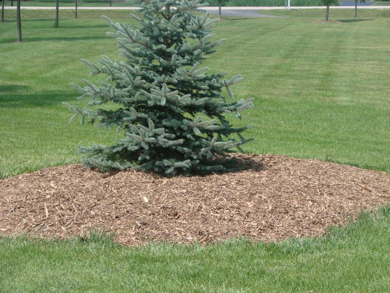 mulching your flowerbeds in summer