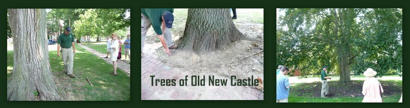 trees of new castle