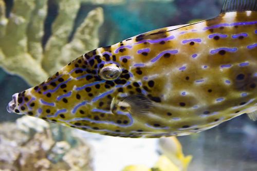 Four Pictures From Sea Life Aquarium In Carlsbad California