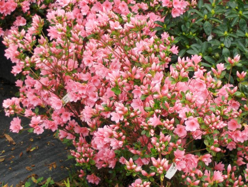 Low maintenance landscaping plants for Best low maintenance flowers