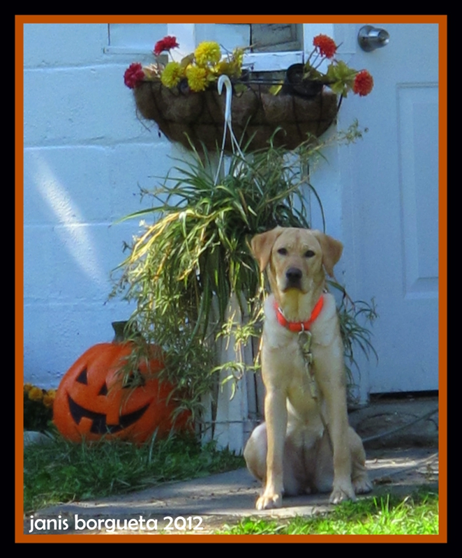 Can Too Much Pumpkin Hurt Dog